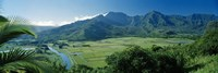 High angle view of taro fields, Hanalei Valley, Kauai, Hawaii, USA Fine-Art Print