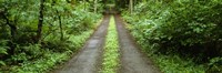 Lush foliage lining a wet driveway, Bainbridge Island, Washington, USA Fine-Art Print