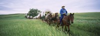 Historical reenactment of covered wagons in a field, North Dakota, USA Fine-Art Print
