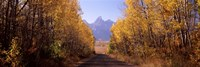 Road passing through a forest, Grand Teton National Park, Teton County, Wyoming, USA Fine-Art Print
