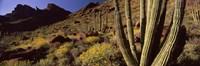 Desert Landscape, Organ Pipe Cactus National Monument, Arizona, USA Fine-Art Print