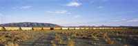 Freight train in a desert, Trona, San Bernardino County, California, USA Fine-Art Print