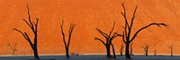 Dead trees by red sand dunes, Dead Vlei, Namib-Naukluft National Park, Namibia Fine-Art Print