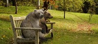 Bears sitting on a bench Fine-Art Print