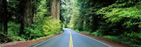 Road passing through a forest, Prairie Creek Redwoods State Park, California, USA Fine-Art Print