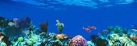 Underwater, Caribbean Sea Fine-Art Print