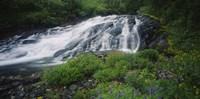 Waterfall in the forest, Mt Rainier National Park, Washington State, USA Fine-Art Print
