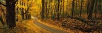 Fall woods Monadnock NH USA Fine-Art Print