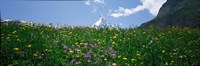 Wild Flowers, Matterhorn Switzerland Fine-Art Print