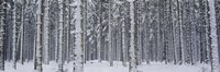 Snow covered trees in a forest, Austria Fine-Art Print