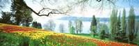 Lake Constance, Insel Mainau, Germany Fine-Art Print