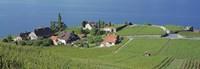Aerial View Of Vineyards By A Lake, Lake Geneva, Vaud, Switzerland Fine-Art Print