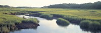 Salt Marsh Cape Cod MA USA Fine-Art Print
