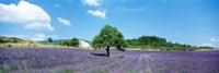 Lavender Field Provence France Fine-Art Print