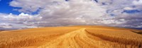 Wheat Field, Washington State, USA Fine-Art Print