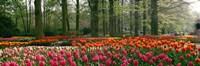 Keukenhof Garden, Lisse, The Netherlands Fine-Art Print