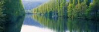 Poplar Trees On River Aare, Near Canton Aargau, Switzerland Fine-Art Print