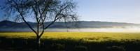 Fog over crops in a field, Napa Valley, California, USA Fine-Art Print