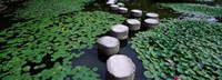 Water Lilies In A Pond, Helan Shrine, Kyoto, Japan Fine-Art Print