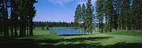 Trees on a golf course, Edgewood Tahoe Golf Course, Stateline, Nevada, USA Fine-Art Print