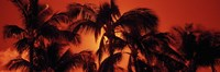 Palm trees at dusk, Kalapaki Beach, Hawaii Fine-Art Print