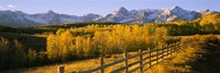 Trees in a field near a wooden fence, Dallas Divide, San Juan Mountains, Colorado Fine-Art Print