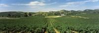 High angle view of a vineyard, Carneros District, Napa Valley, Napa County, California Fine-Art Print