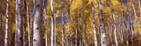 Forest, Grand Teton National Park, Teton County, Wyoming, USA Fine-Art Print