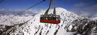 Overhead cable car in a ski resort, Snowbird Ski Resort, Utah Fine-Art Print