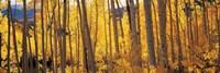 Autumn Aspen trees, Colorado, USA Fine-Art Print