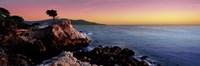Silhouette of Lone Cypress Tree at a coast, 17-Mile Drive, Carmel, Monterey County, California, USA Fine-Art Print