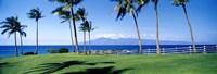 Palm trees at the coast, Ritz Carlton Hotel, Kapalua, Molokai, Maui, Hawaii, USA Fine-Art Print