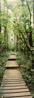Stepped path surronded by Bamboo shoots, Oheo Gulch, Seven Sacred Pools, Hana, Maui, Hawaii, USA Fine-Art Print