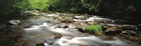 River flowing through a forest, Little Pigeon River, Great Smoky Mountains National Park, Tennessee, USA Fine-Art Print