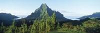 Mountains at a coast, Belvedere Point, Mont Mouaroa, Opunohu Bay, Moorea, Tahiti, French Polynesia Fine-Art Print
