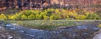 Virgin River at Big Bend, Zion National Park, Springdale, Utah, USA Fine-Art Print