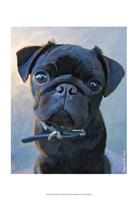 Pug Baby Blue Fine-Art Print