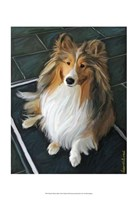 Sheltie Bred to Bark Fine-Art Print
