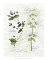 Oregano & Mint Fine-Art Print