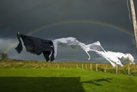Rainbow, Stormy Sky and Clothes Line, Bunmahon, County Waterford, Ireland Fine-Art Print