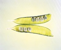 Two transparent pea pods with yellow green background Fine-Art Print