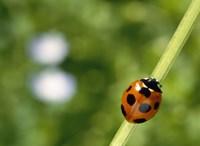 Ladybug on a stem Fine-Art Print