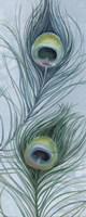 Blue Feathered Peacock V Fine-Art Print