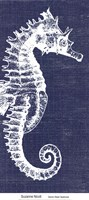 Denim Washed Seahorse Fine-Art Print