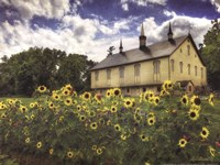 Sunflower Garden Fine-Art Print