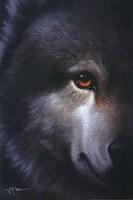 Endangered Wolf Fine-Art Print