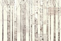 Birch Trees on White Fine-Art Print