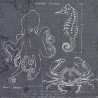 Coastal Blueprint II Fine-Art Print