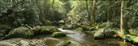 Roaring Fork River flowing through forest, Roaring Fork Motor Nature Trail, Great Smoky Mountains National Park, Tennessee, USA Fine-Art Print