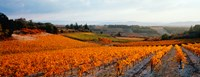 Vineyards in the late afternoon autumn light, Provence-Alpes-Cote d'Azur, France Fine-Art Print